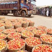 Kano Tomato, Onion Farmers, Marketers Lose Big As Blockade Persists