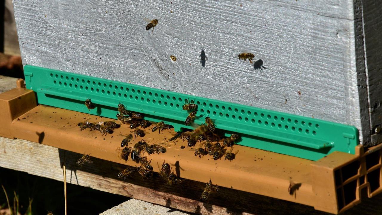 Une formation pour protéger les ruches et les abeilles du varroa