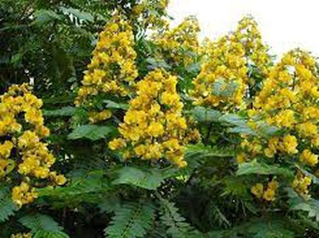 The Only Plant That Can Cause Sickness And At The Same Time Cure You. Follow Directions