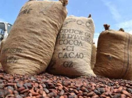 Côte d'Ivoire : Le prix bord champ de la fève de cacao fixé à 750 Fcfa le kilogramme.
