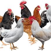 What you need to know about owning a Poultry Farm