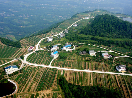Courtyard economy bears sweet fruits in increasing income in SW China's Cangxi county