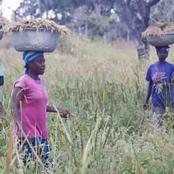 Court Grants Farmer ¢50k Bail For Farming In Forest Reserve.