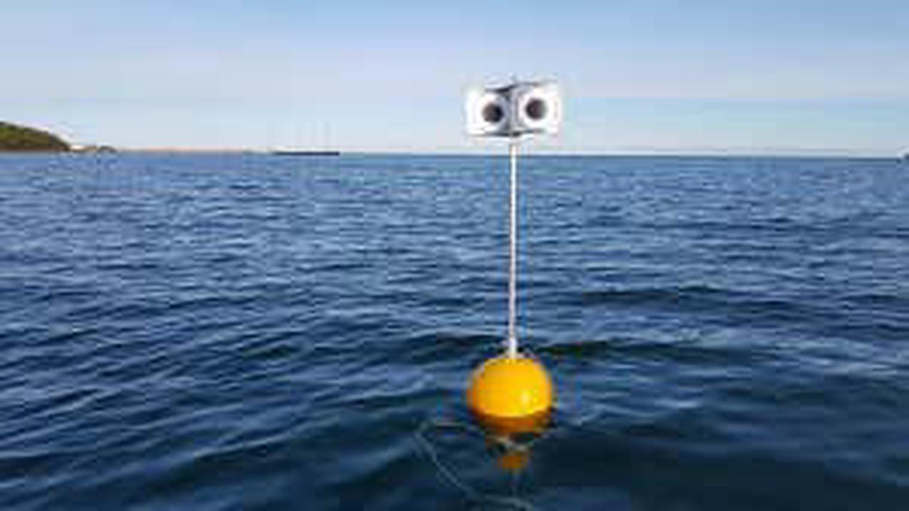 Floating googly eyes on a stick scare seabirds away from fishing nets