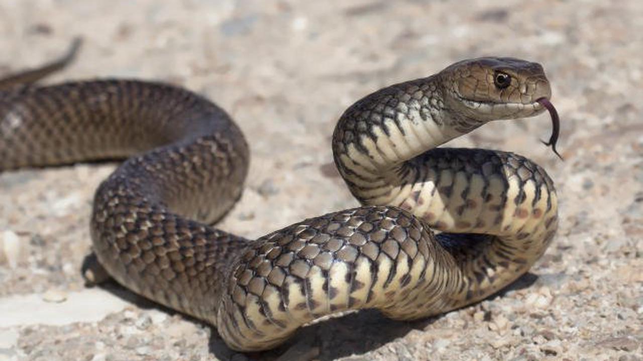 Schlange legt ganze Stadt lahm