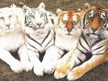 The Asian Tigers and what we could learn from them.