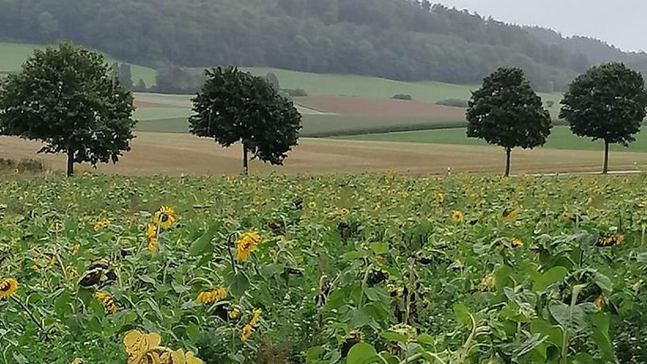 Bodenschutzpreis Nordrhein-Westfalen 2021: Jetzt bis zum 16. August bewerben