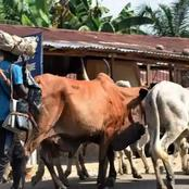 Cattle Dealers Begin Nationwide Strike Today, Give Reasons