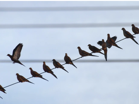 Ever Wondered Why Birds Aren't Electrocuted While Sitting On Power Line? Read to Know Why