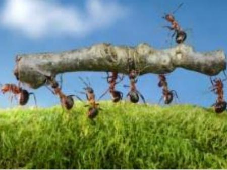 Life Lessons To Learn From An Ants