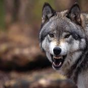 شاهد ذكاء وعقبرية سيدنا سليمان عليه السلام في تعامله مع المرأتين التي أكل الذئب ابن احداهما