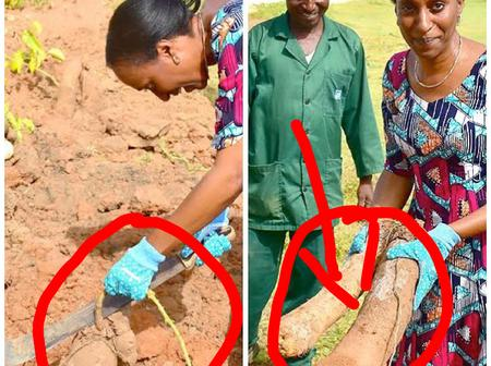 Is She Still farming? Throwback Photos of VP Osinbajo's wife When She Visited her Yarm Farm In 2016