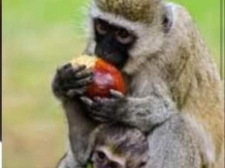 A Family Forced To Sleep In the Cold After Monkeys Invaded Their Home