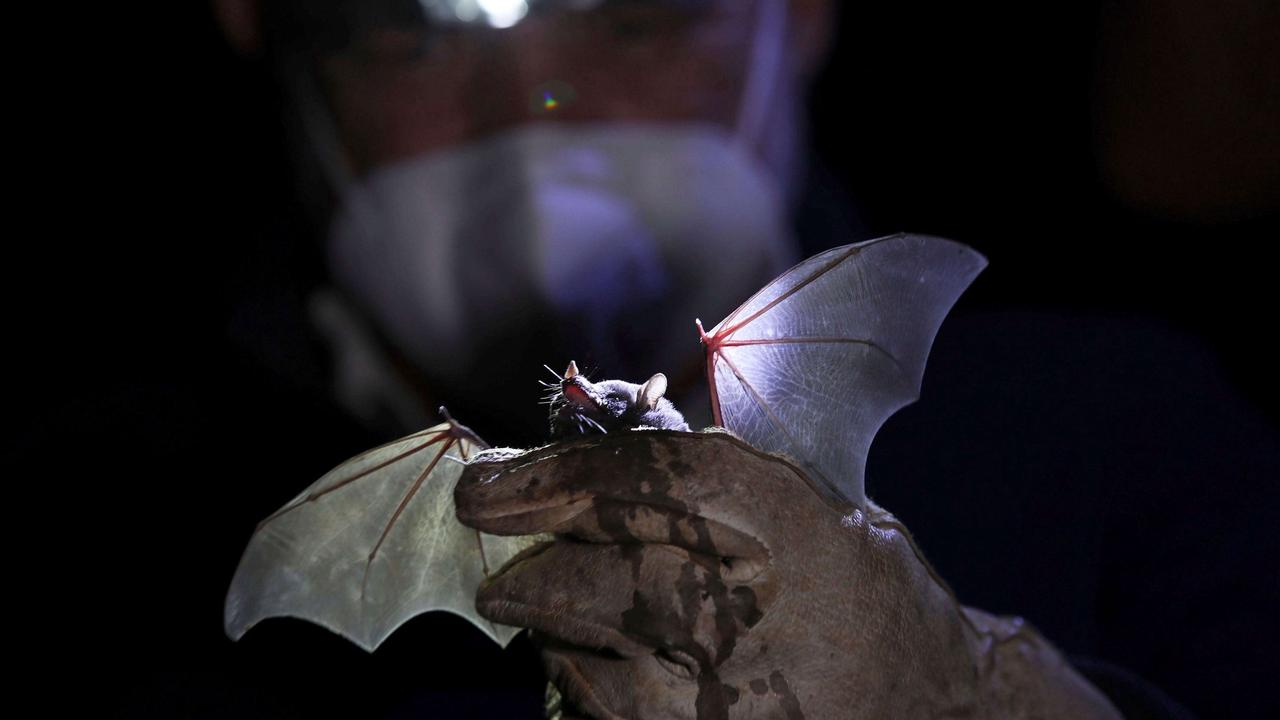 Bat tests positive for rabies in Pitcairn after biting child