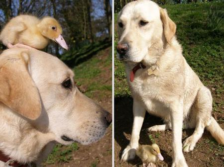 10 unlikely animal friendships that will melt your heart