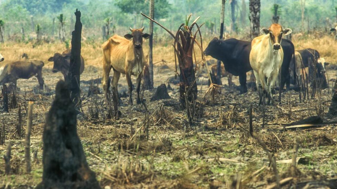 Déforestation en Amazonie : Casino mis en demeure par des ONG