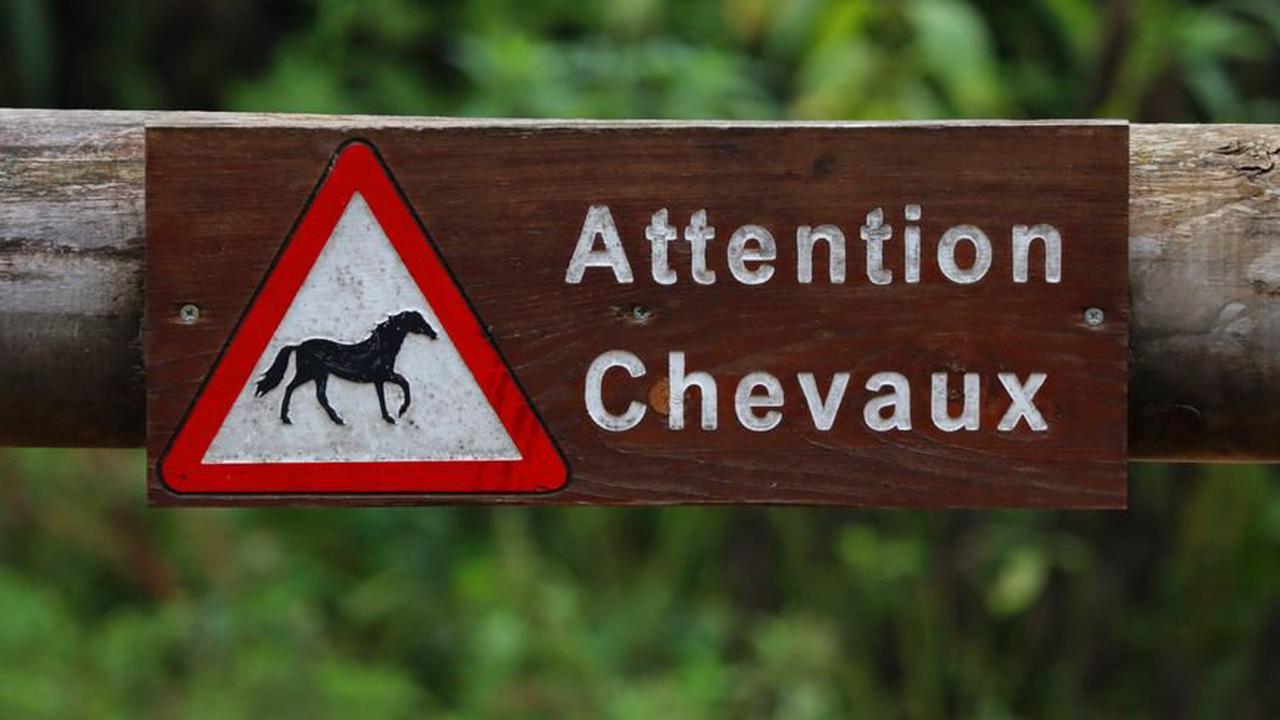 Les gendarmes du Tarn sur le terrain et au contact pour protéger les chevaux