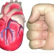 9 facts you may not know about the human heart.