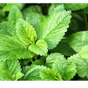 Use lemon balm to treat these health problems