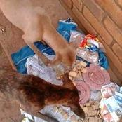 Venda man who buys his dogs 100% juice.Dorritos. cold drink and Wors