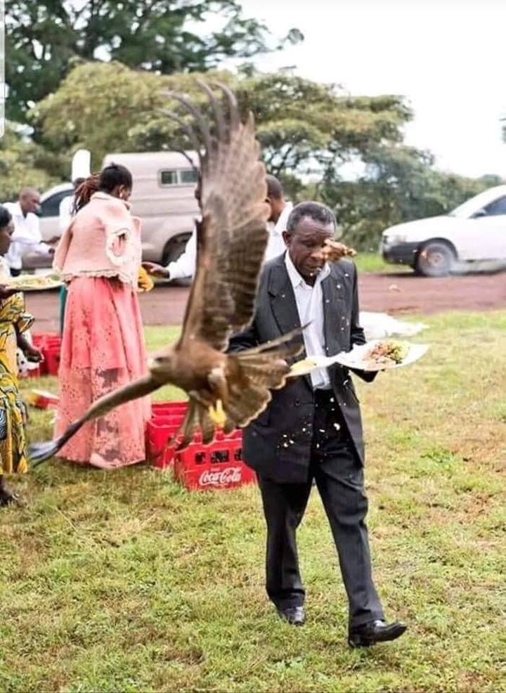 345cf1f34279a247776f80f1b3b6e911?quality=uhq&resize=720 - Man Almost Weeped After a Hawk Snatched Meat On His Food At A Wedding Ceremony
