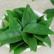 Apart from consumption, see how you can use curry leaves to achieve a rapid hair growth