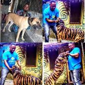 """Na Wa o"" — This Nigerian Man Painted His Dog To Look Like a Tiger (See Photos)"