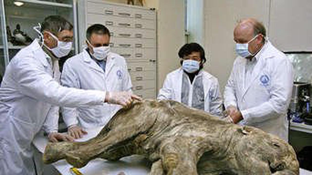 In 6 Jahren könnte es Mammuts auf der Erde geben: Forscher wollen sie zum Leben erwecken
