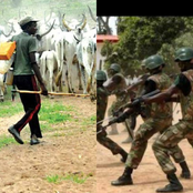 Today's Headlines: Troops Recover 200 Cattle In Kaduna, President Muhammadu Buhari Returns From UK