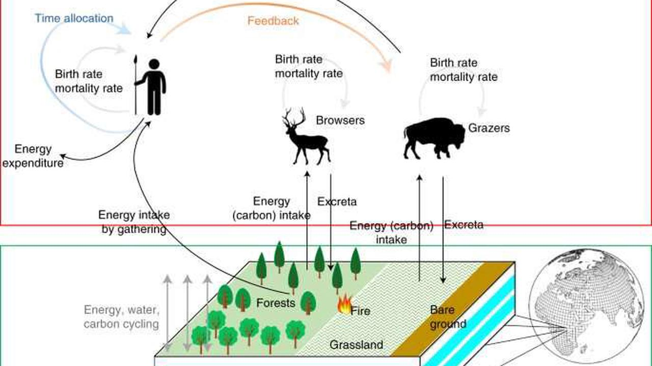 Meat-Heavy Diets Restricted Hunter-Gatherer Population Sizes