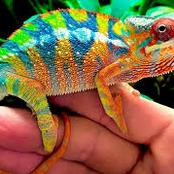 Check Out 7 Animals That Change Color Better Than Chameleons