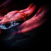 اصطياد ثعبان نادر في فلوريدا.. ولكن ما تم اكتشافه كان غريب ومفاجئ