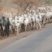 Herdsmen: Adamu Garba states position on open grazing, Fulani's claim of land ownership