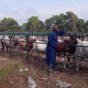 Un malheur a frappé de plein fouet les éleveurs de la région de la Bagoué