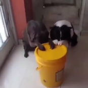 Check Out The Video Of 2 Dogs That Prays Before Eating Their Food