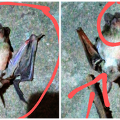 See The Strange Animal I Saw In My House Hours After My Night Prayers.