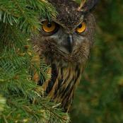 An Owl: Key things people should know when seeing an Owl.