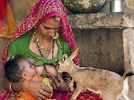 A woman breast feeding baby goat after loosing its mother.