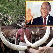How Cyril Ramaphosa built his R7 billion empire