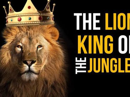 Ever Wondered Why Lions Are Called King Of The Jungle Despite Living In A Savannah?