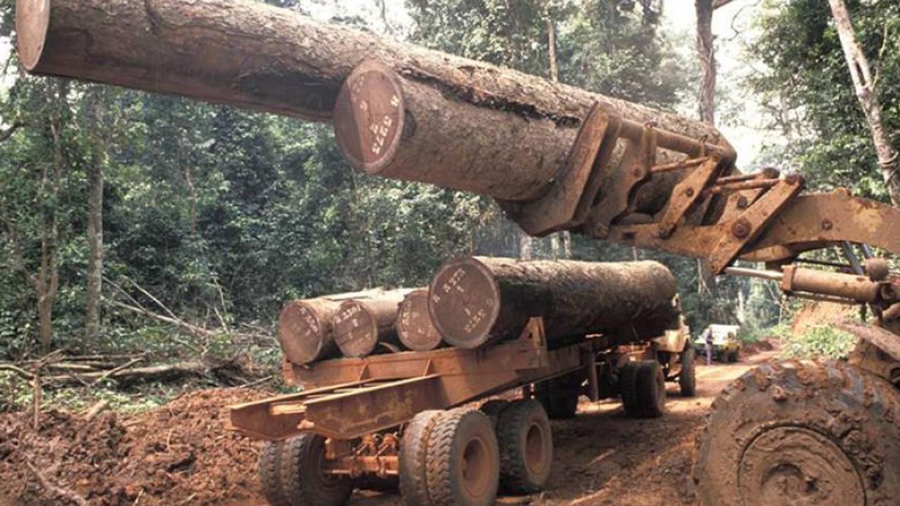 Congo : un projet pour l'amélioration de la gouvernance forestière