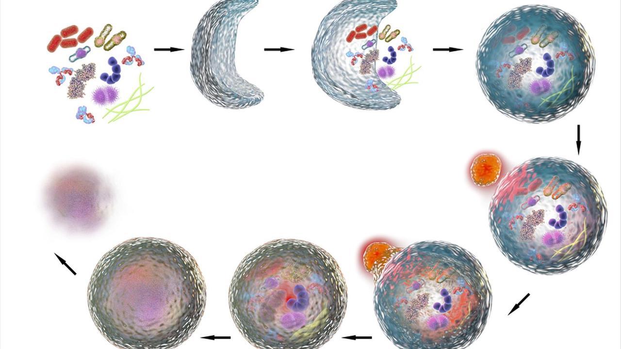 SARS-CoV-2 proteins manipulate autophagy