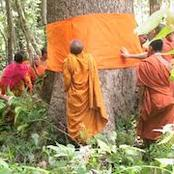 Ancestoral forests- the importance of cultural belief.