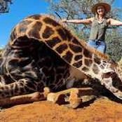 Limpopo woman unrepentant despite global outcry for posing with heart of dead giraffe
