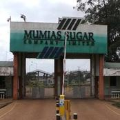 Mumias Sugar Company Becomes the Latest to Send Workers Home