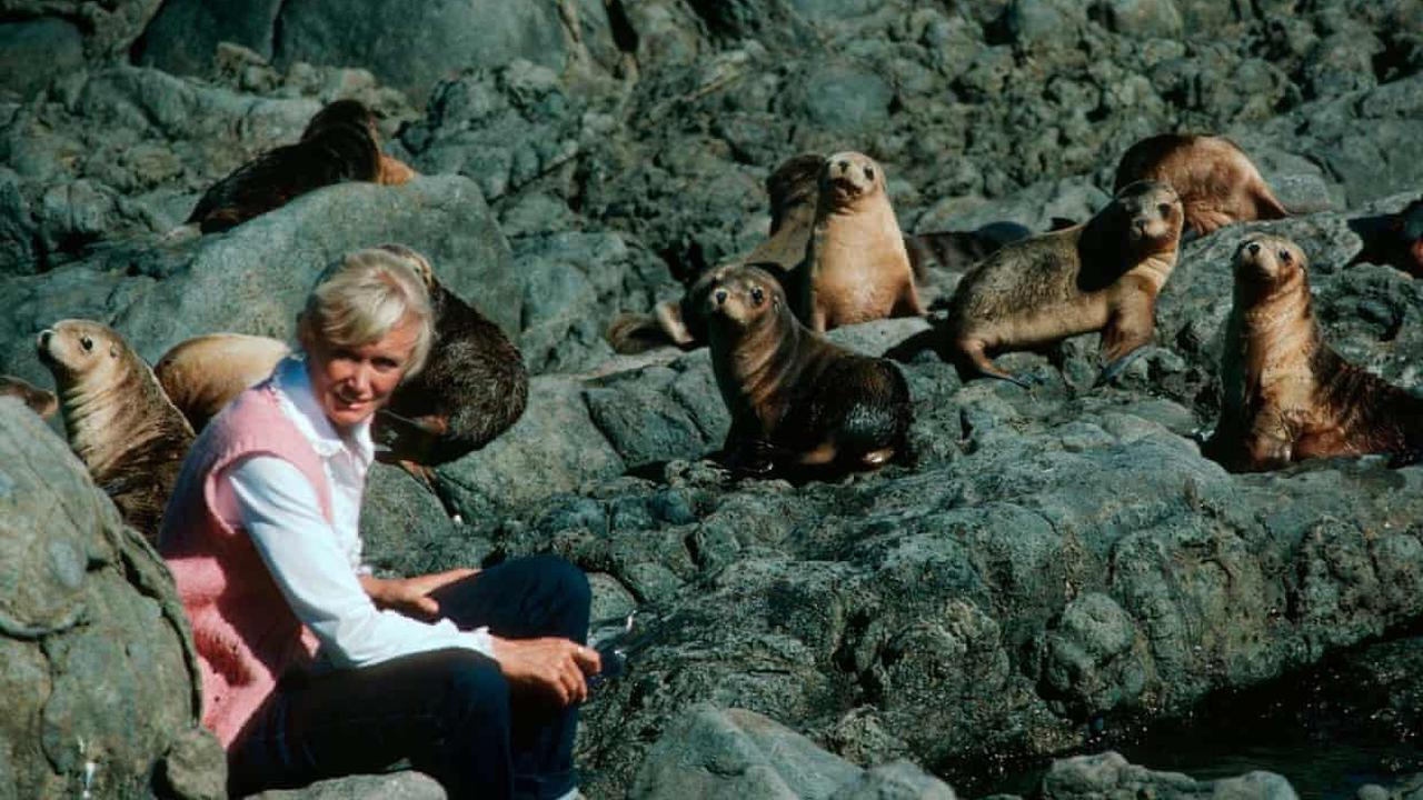 I met my first Australian sea lion 57 years ago. Today I fear for this delightful animal