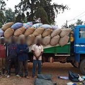 Des tonnes d'anacarde ivoirien continuent d'être acheminer vers le Ghana