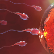 Maintain Your Fertility By Avoiding These Things In Your Life