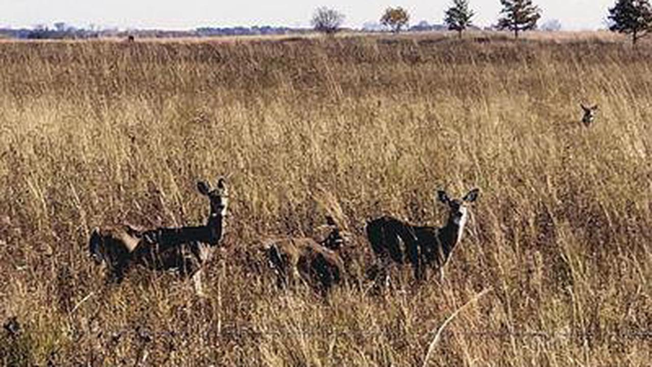 Fish & Wildlife now lists cause of deer deaths as Adenovirus Hemorrhagic Disease
