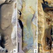 نادر جدا.. آثار أقدام إنسان عمرها 100 ألف عام توضح أطفالاً يلعبون في الرمال